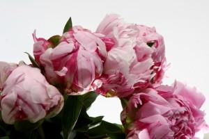 SICA Marché Aux Fleurs d'Hyères