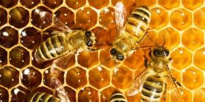 abeilles ruche miel apithérapie