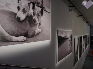exposition-je-suis-un-animal-Theatre-Liberte-Toulon-2014