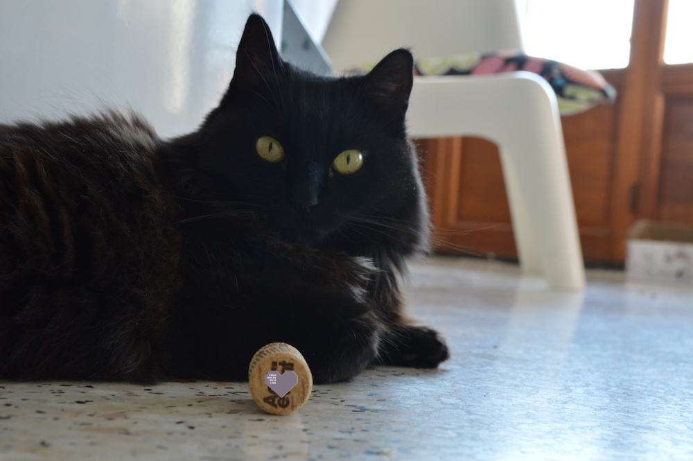 chat noir angora Swiffer blogueuse à chat