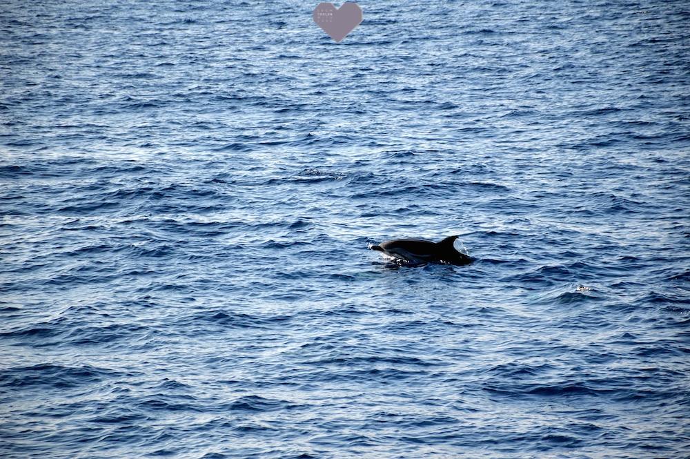 Super J'ai vu des dauphins en mer au Lavandou grâce à Souffleurs d'écume FJ69