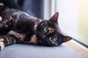 chat à adopter toulon var paca